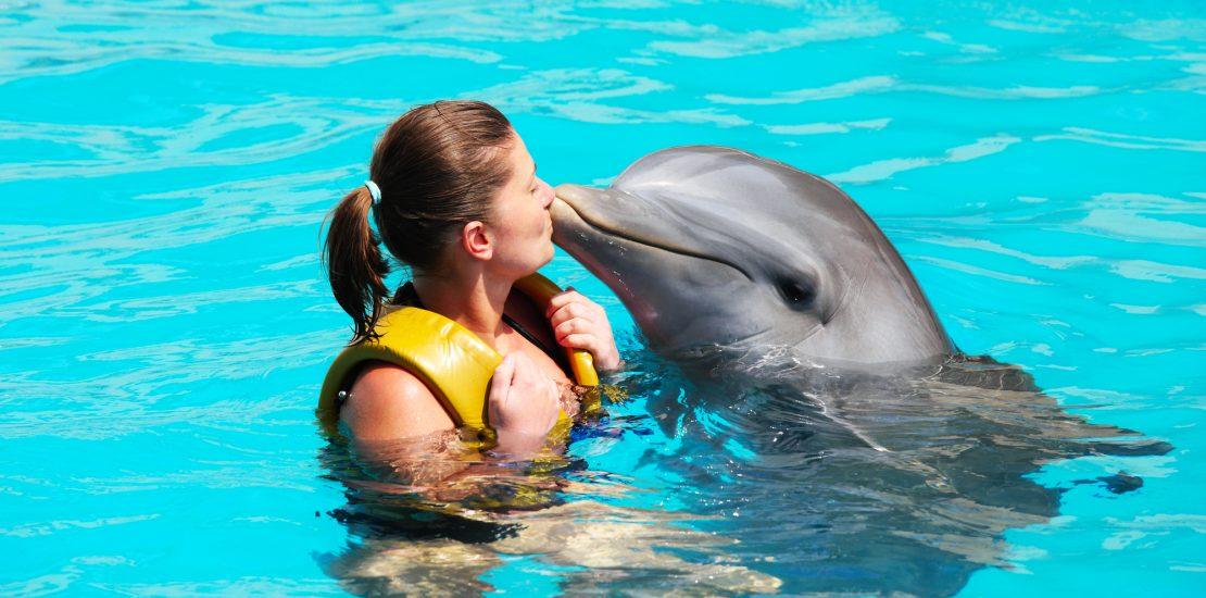 Nage avec les dauphins,