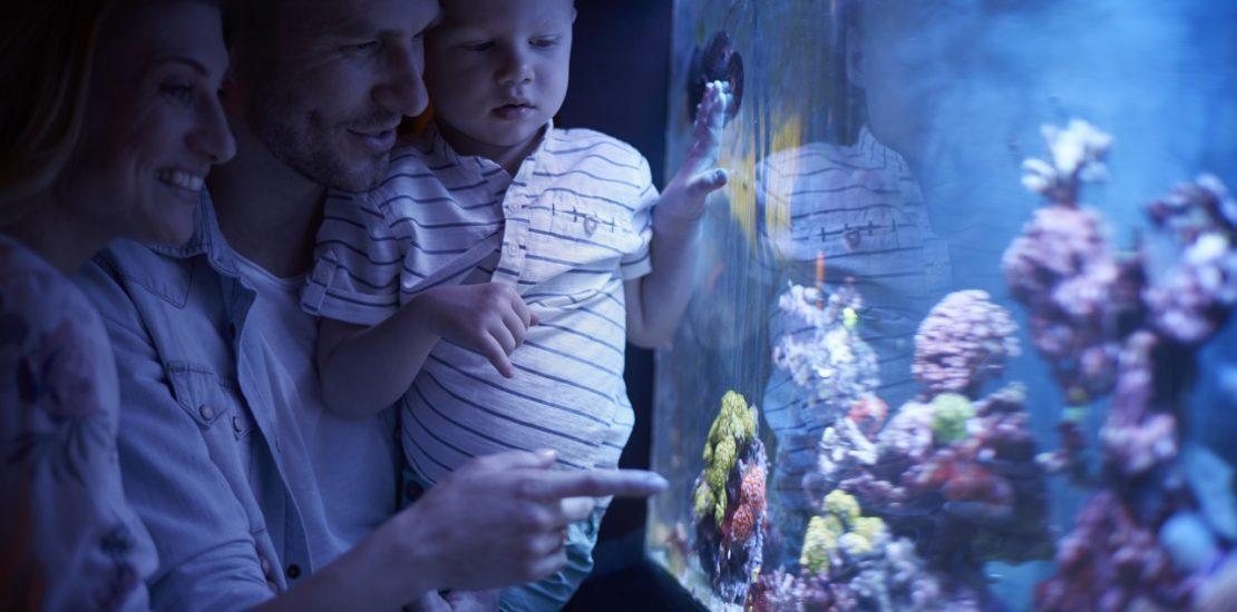 maintenance aquarium à Nice